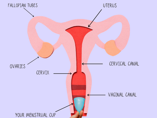How to measure your cervix for menstrual cup? ~ How to find the right menstrual cup for you
