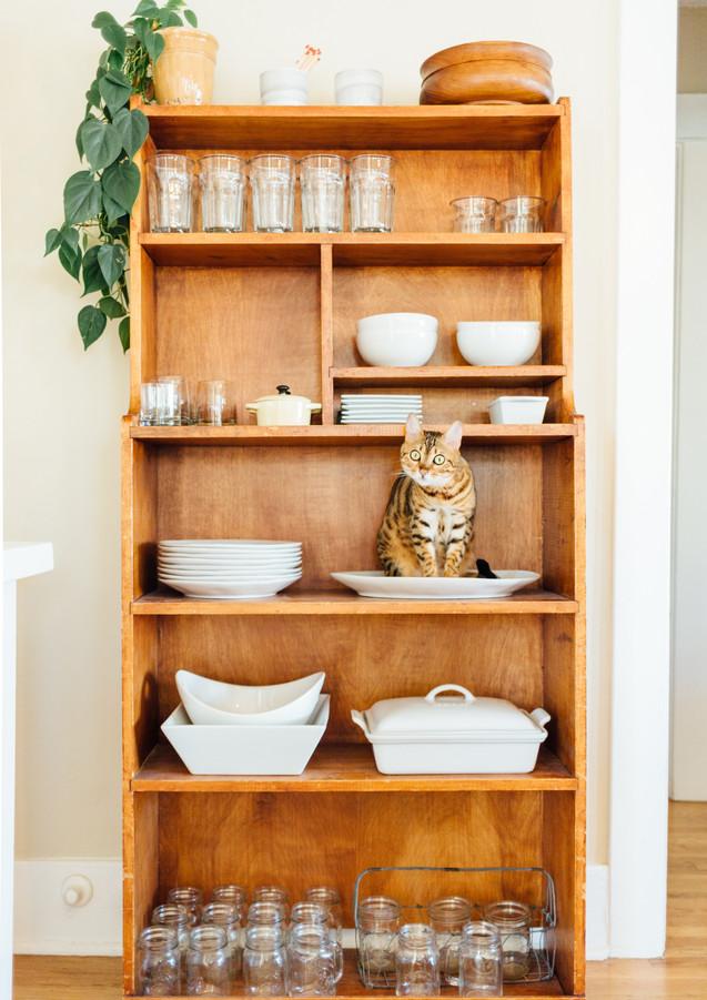 Küchenregal_mit_Katze