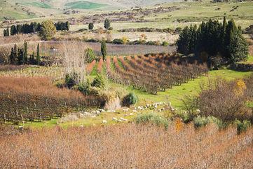 Panorama, Agriturismo Sicilia