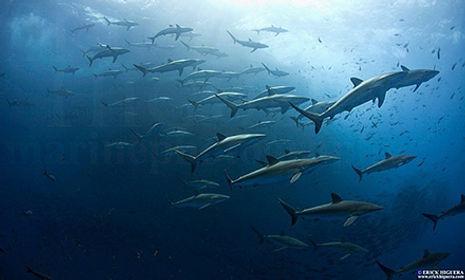 erick-higuera-schooling-sharks-roca-part