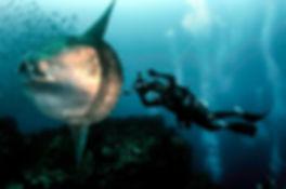galapagos-islands-scuba-diving-mola-mola