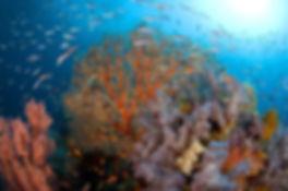 pindito-raja-ampat-colorful-coral-reef-0