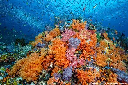 kerri-bingham-raja-ampat-colorful-coral-