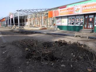 Балашовцы переживают из-за массовой вырубки деревьев
