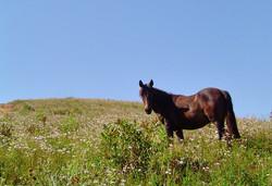 aluguel de cavalo
