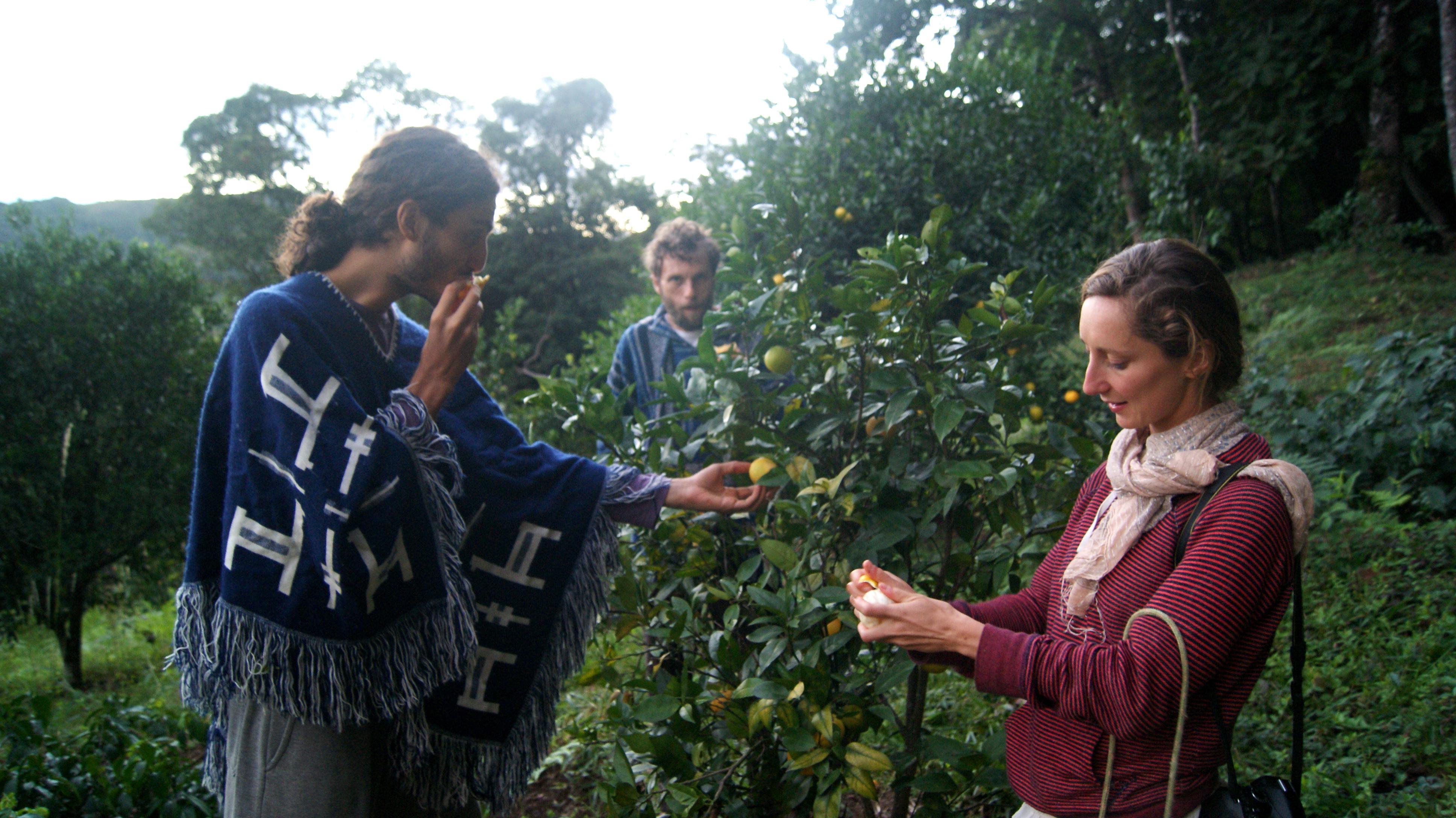 degustação de laranjas no pomar