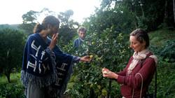 degustação no pomar