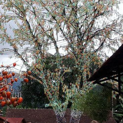 Ostetbaun é uma árvore de páscoa da tradição alemã