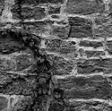 ivy_on_old_stone_wall+bandw.jpg