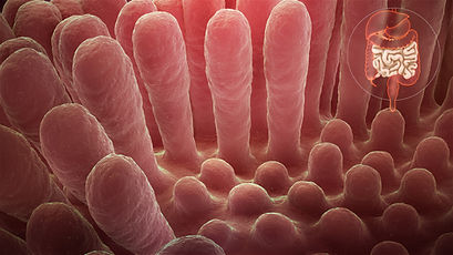 Healthy small intestine (left) versus damaged small intestine (right)