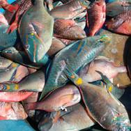 Local Fresh Fish