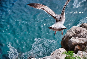 seagull-4134265_1920.jpg