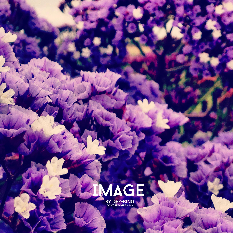 IMG_2285_2014DK