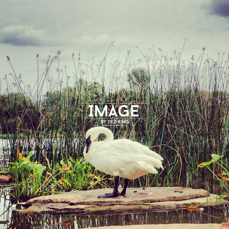 IMG_6210_2014DK