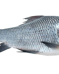 Catla Fish Online.jpg