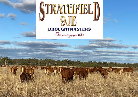 Strathfield 9JE pic and logo.jpg