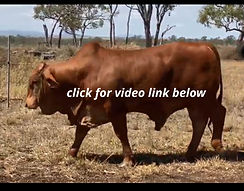 23 video.jpg