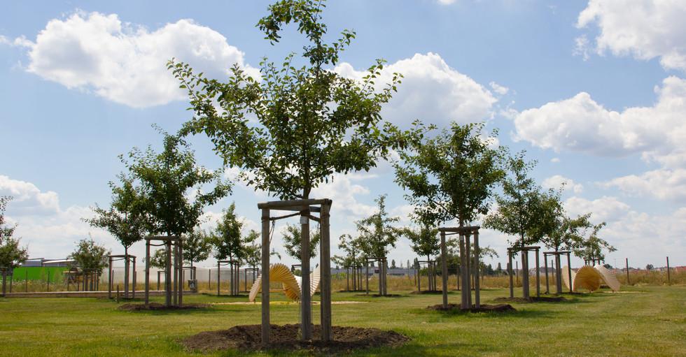 Apfelbaumwiese.jpg