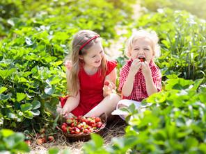 Erdbeeren aus dem eigenen Garten