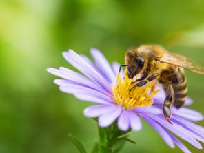Bienen freuen sich