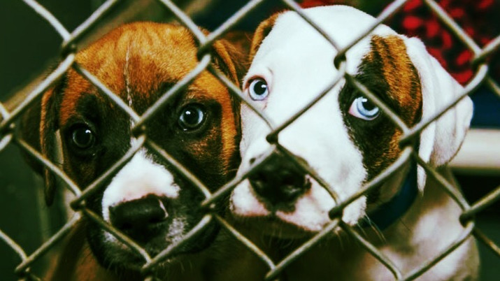 Miami-Dade Animal Services Offering $1 Adoption Fee for all Pets Today.