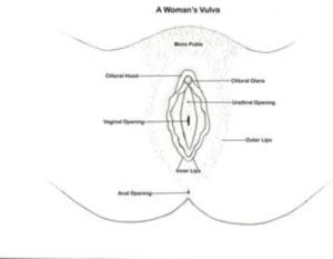 A woman's vulva