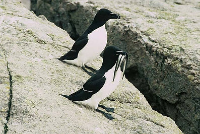 Forfait Petits Pingouins - Motel Sympathique