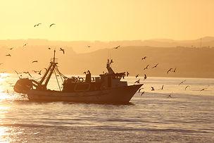 precision-seafood-boat_edited.jpg