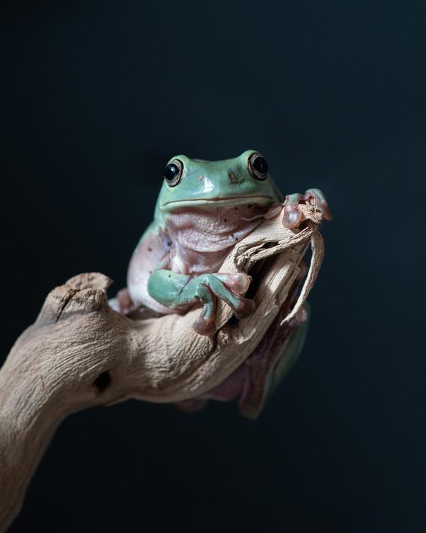 Фотограф Таня Асфирь