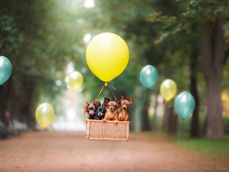 Смелые маленькие той терьеры - The brave little Terriers