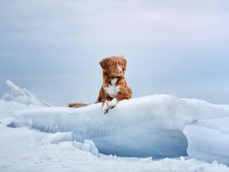 на Ладожском озере - on Ladoga lake