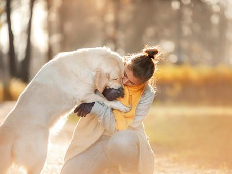 Настя и ее собаки - Nastya and her dog