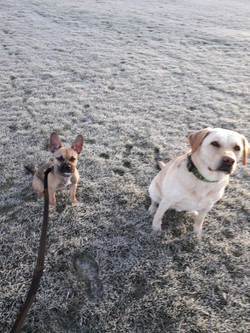 Well behaved dogs