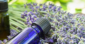 Using essential oils safely for pets