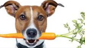 Fresh food = Healthier pets!