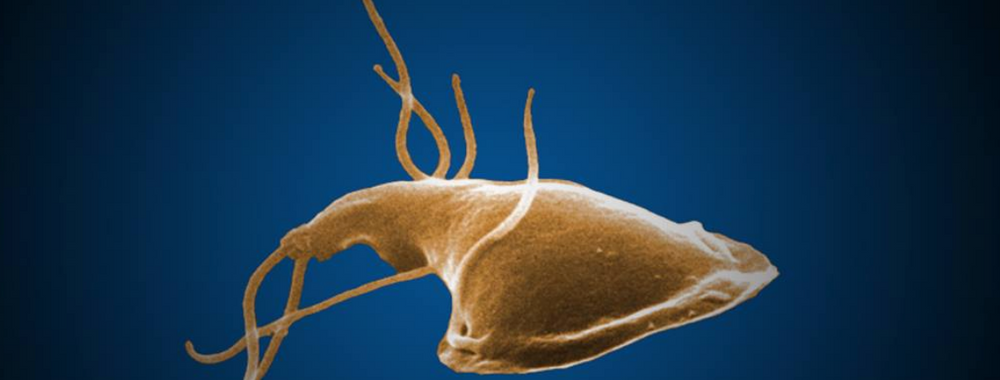 Giardia in humans skin. Indications associated with oils, Giardia skin infection