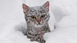 Winter Safety for Your Pet: Pet Boots?