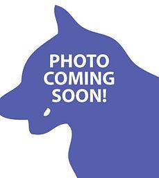 AWS_PhotoComingSoon_Icon_Dog.jpg