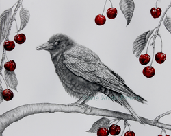 Crow with Cherries