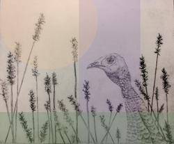 Turkey in Lavender
