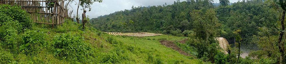 coffee fields.jpg