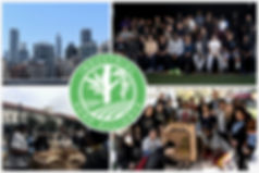 IHA Website Collage 1.jpg