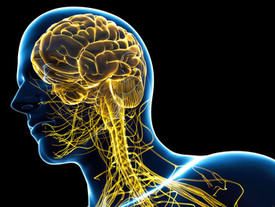 Understanding the brain circuits involved in eating disorders
