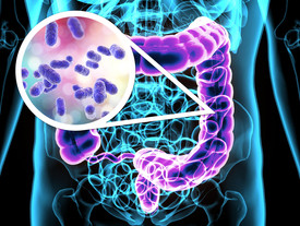Gut bacteria involved in the development of type 2 diabetes