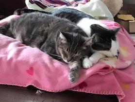 Soren & Amelia 3.jpg