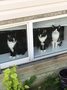 3 amigos  Seb Fl Att.jpg