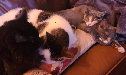 Freya Stash and foster siblings.jpg
