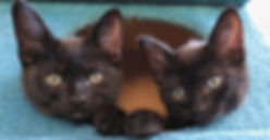 Two Black Cats Foster LCCR.jpg
