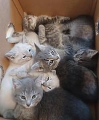 Gianna kittens 01.jpg