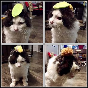 Hank hats.jpg